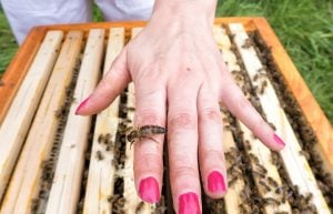 Queen bee syndrome