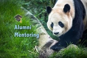 WWF Alumni Mentoring, Panda